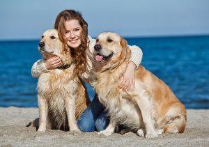alimentation pour les chiens en surpoids