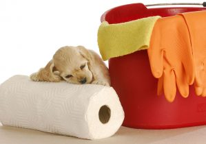 apprentissage de la proprete