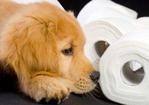 chien apprentissage de la proprete