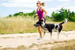 complements nutritionnels pour les chiens actifs