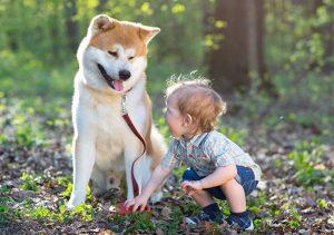dog teaching responsibility