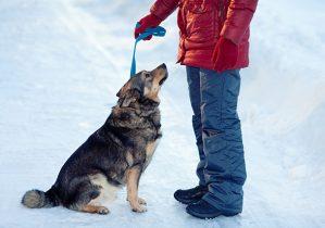 formation de obéissance chien
