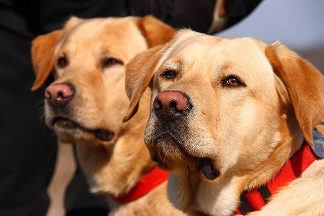 regles dressage laisse pour chien